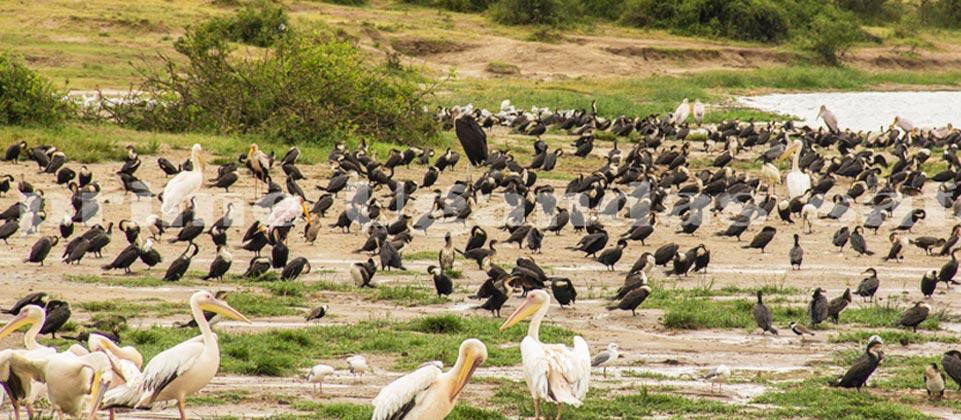 birding_uganda
